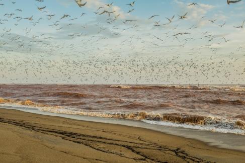 Hotspot de biodiversidade mundial, a região da foz do Rio Doce, onde quebra a mítica onda de Regência, foi tomada pelos rejeitos de mineração da Samarco, em 21 de novembro. (1/4)